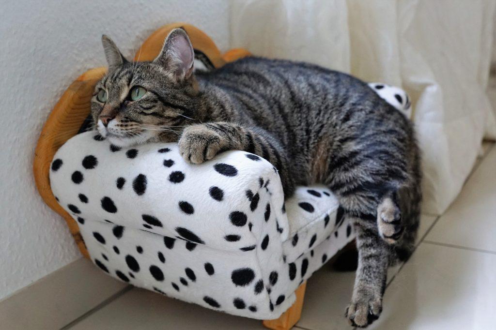 Immobilized cat