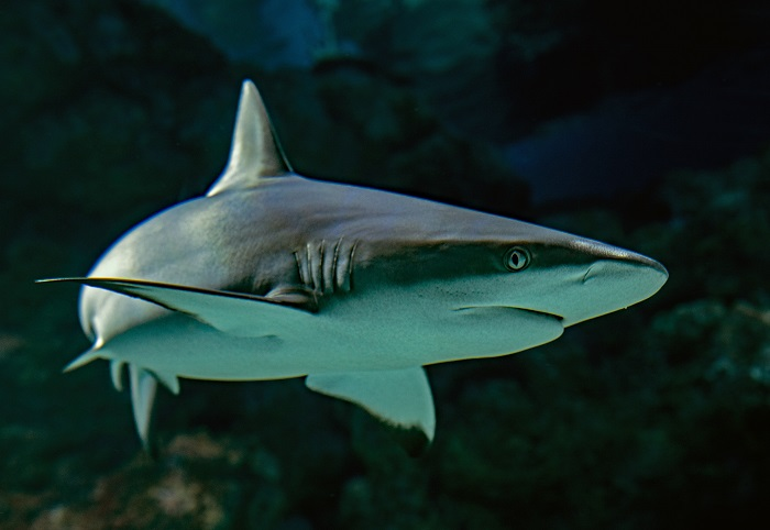 How to Have a Sales Conversation Without Feeling Sharky